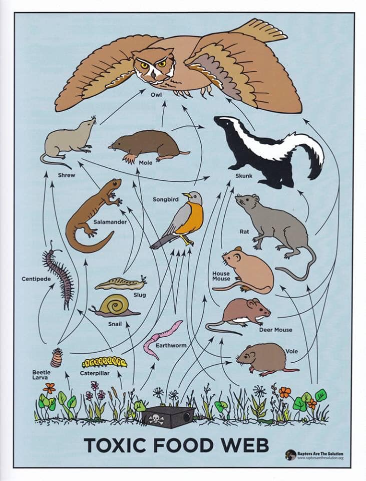 Poison Food Chain